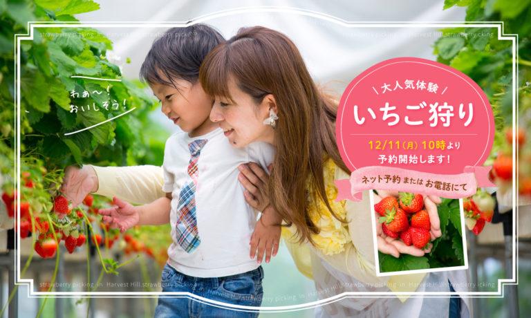 ichigo_L-768x460